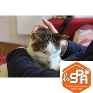 SPA : Nourrir un chat pendant 1 mois