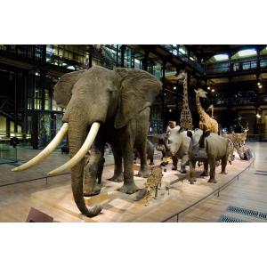 Muséum National d'Histoires Naturelles - Grande Galerie de l'Evolution & son exposition temporaire