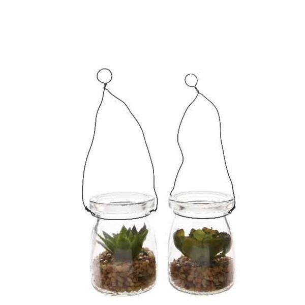 Glasampel med succulent